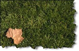 Planting grass seed? Get our Easy Lawn Care program.
