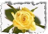 Easy Rose Gardening by Robert Mosse