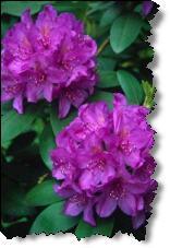 Perennial Spring Flowers