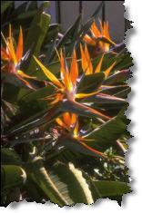 Tropical Flowers Need TLC