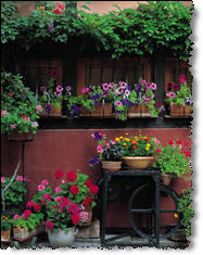 Get great container gardening ideas and tips.