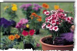 Our flower guide of popular annuals and perennials will give a jump start your garden plans.